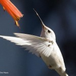 plus-belles-images-oiseaux-national-geographic-wallpaper-2